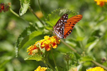 Colorful butterfly.