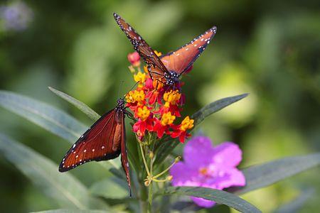 Butterflies in the wild. Stock Photo - 5463942
