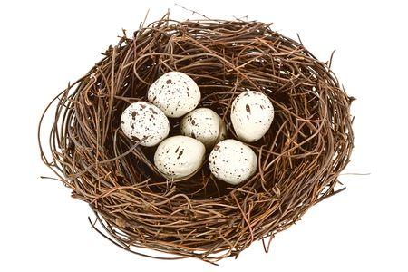 pigeon egg: Bird nest over white.