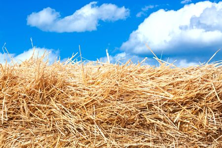Hay stack detail. Stock Photo - 7638822