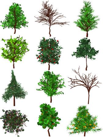 Conjunto de 12 de silueta de árboles.