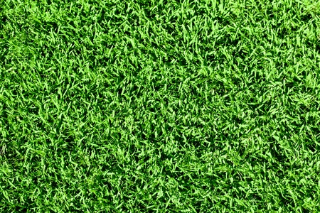 Green seamless fresh grass. photo