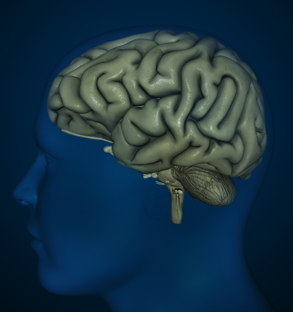 ventricles: Brain detail Stock Photo