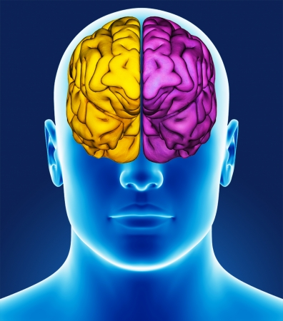 Brain detail Stock Photo