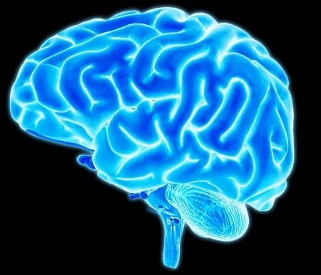 Brain detail Stockfoto