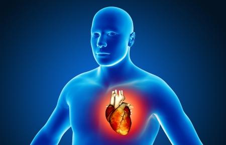 3d human: Human heart