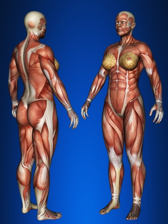 ligament: Woman muscle map