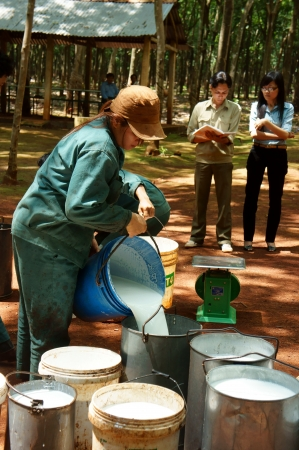 workwoman: After collect rubber latex, they move them to concentration area and weigh them  Binh Phuoc,Viet Nam-  May 9, 2013