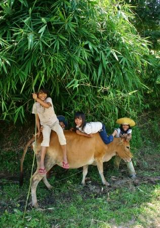 Daklak has many ethinic minority,  children rarely go to school so they help their family to herd oxen  Daklak, Viet Nam- September 03, 2013 Stock Photo - 22056418