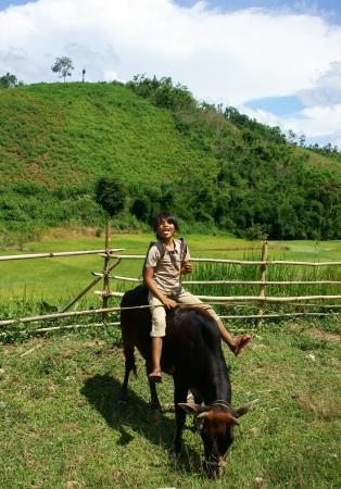 Daklak has many ethinic minority,  children rarely go to school so they help their family to herd oxen  Daklak, Viet Nam- September 03, 2013 Stock Photo - 22056420