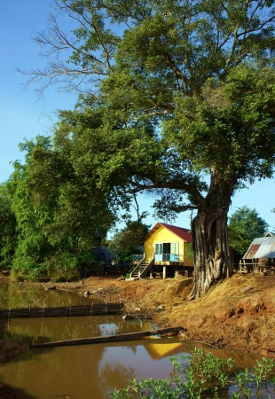banian tree: House on stilts in yellow, reflect on surface water, it locate under ancient tree with sunny day