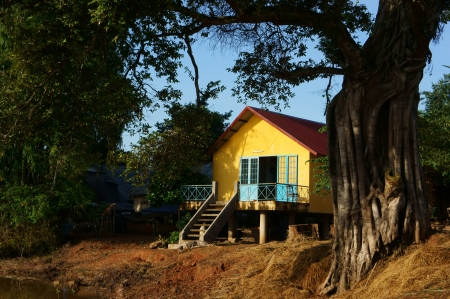 House on stilts in yellow, lay under ancient tree, foot of the tree very large, sunlight iluminate on the wall remarkable yellow wall