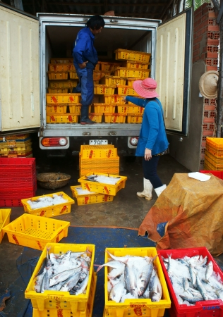 Fish is placed in yellow plastic trays, transported to wholesale at fishing market, men and women take these plastic tray out of the truck to sale for buyer  July 15, 2013