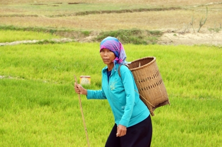 nurseryman: Woman wear headscarf, carry papoose (gui) step on the way with stick on hand at countryside. December 30, 2012