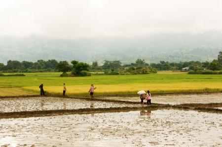 2012 年 9 月 5 日に田んぼダックラック、ベトナムを歩いて農家
