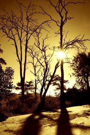 albero secco: Bellissimo paesaggio con silhouette di albero secco all'alba