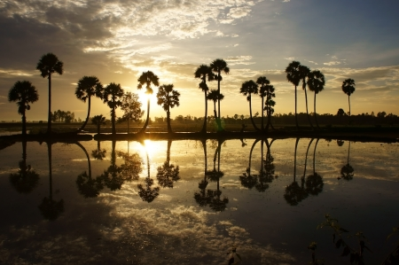 Beautiful landscape of nature with dramatic cloudscape, row of palm trees in silhouette reflect on surface water of river at sunset Stock Photo