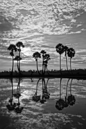 Beautiful landscape of nature with dramatic cloudscape, row of palm trees in silhouette reflect on surface water of river  photo
