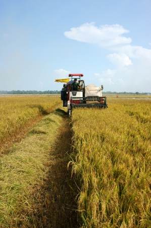 Farmer harvest rice on ripe paddy field by combine harvester in Dong Thap, Viet Nam on September 12, 2013