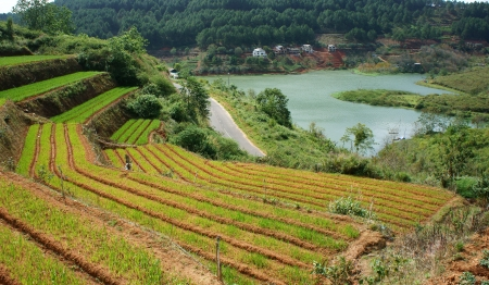The lake enclosed by one side is green vegetable terrace garden with terrace down to the asphalt road, another side is pine jungle with some villa inside Stock Photo