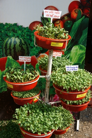 Model of cultivation young sprouts in growing medium showing in Hitech agriculture fair in Ho Chi Minh city, Viet Nam on Dec 12, 2013 photo