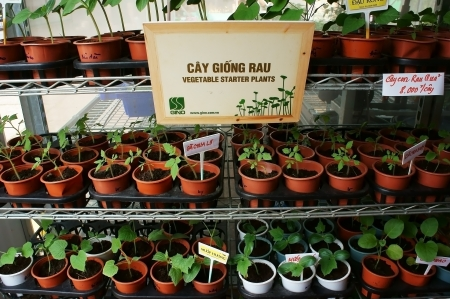 nurseling:  Vegetable starter plants in pots and showing on shelves in store at Hitech Agriculture fair  in Ho Chi Minh city, Viet Nam on Dec 12, 2013 Editorial
