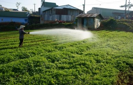 DA LAT, VIETNAM- DEC 28  Vietnamese farmer watering on vegetable field at morning, the carrot farm growing in best in Dalat, Viet Nam on Dec 28, 2013 Editorial