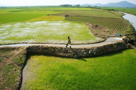 DAKLAK, VIETNAM- FEB 7: Farmer pump water to rice field for crop, he walk on dike, impression of vast paddy plantation with irrigation canal system, Viet Nam, Feb 7, 2014                            Editorial