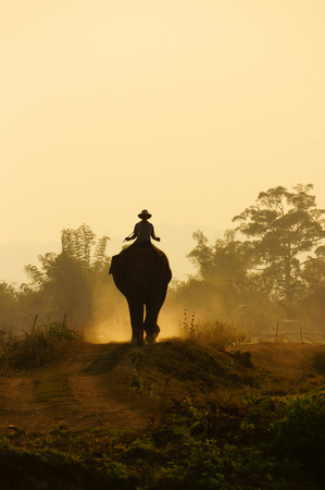 buon: Silhouette of people ride elephant walking on the path at Vietnam countryside, the dusty way by dust of soil, mahout ride this animal for travel in Buon Me Thuot Stock Photo