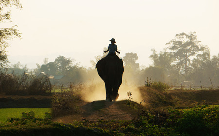 Silhouette of people riding elephant walking on the path at Vietnam countryside, the dusty way by dust of soil, mahout ride this animal for travel in Buon Me Thuot
