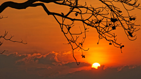 Evening scene with sun go down, sky in brilliant orange, silhouette of branch of tree in sunset photo