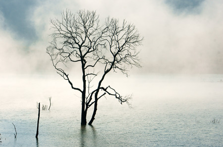 Amazing scene of nature with lonely dry tree sink on water, lake in fog at morning photo