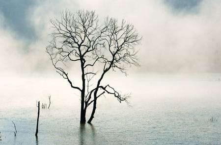 albero secco: Incredibile scena della natura con albero solitario lavello secco su acqua, lago nella nebbia al mattino