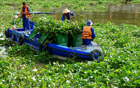loc: HO CHI MINH CITY, VIETNAM- MAY 13  Group of Vietnamese sanitation worker working on Nhieu Loc canal, three people in uniform and life jaclet try to take water hyacinth on boat, Viet Nam, May 13, 2014