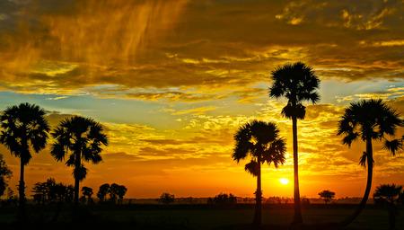 Amazing landscape of Mekong Delta at sunrise on field