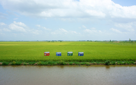 Green rice field at Mekong Delta under cloudy sky, paddy field along ditch, advertise panel on farmland, fresh air at village photo