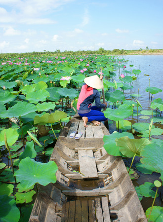Beautiful landscaping of Vietnamese village, woman rowing the row boat to pick lotus flower on waterlilly pond at Mekong Delta
