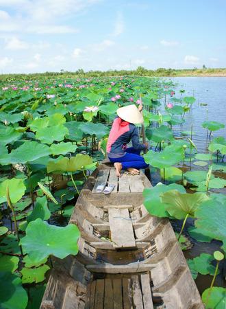 flor de loto: Hermoso paisaje de la aldea vietnamita, mujer remando el barco de la fila para recoger la flor de loto en el estanque waterlilly en Mekong Delta Foto de archivo