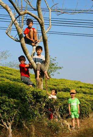 frendship: DA LAT, VIET NAM- JAN 24: Group of Asian children with outdoor activity, Vietnamese boy climbing to tree at tea garden, active kid happy with friendship, Dalat, Vietnamese, Jan24, 2014 Editorial