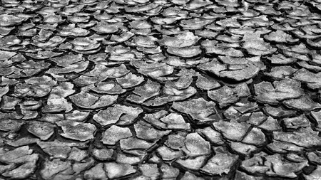 waterless: Drought land in piece, climate change make extreame weather, dry field by hot season and waterless, this cause by warming global, very urgent situation