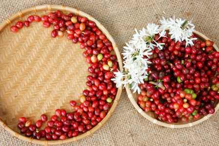 Close up of red coffee bean, agriculture product of Vietnam,  cafe bean in bamboo basket on sackcloth background, amazing  shape with fresh ripe berries in vibrant colors