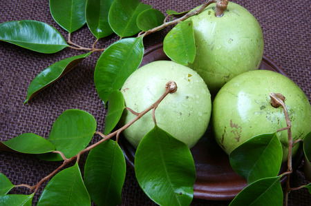 exported: Vietnam fruit, milk fruit or star apple or Vu Sua, is special farm product that only Viet nam exported, close up of this nutrition, organic fruit with green leaf on brown background Stock Photo