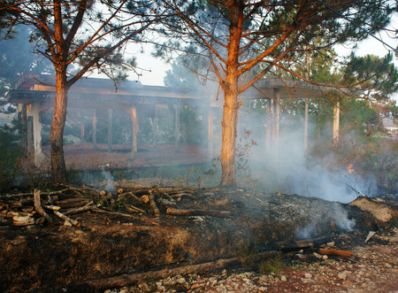 environment damage: Ash from burn dry grass in pine forest, with this careless make many forest fire, especial in hot season, branch of tree were cut, damage ecology cause change climate, unsafe for environment
