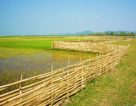 Beautiful Vietnamese rural, green paddy field with bamboo fence under sky, Vietnam countryside is place for ecotourism with fresh air, beauty scene, nice agriculture farm photo