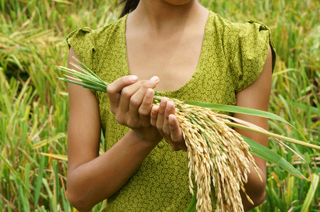 Voedselzekerheid in de wereld, een mondiaal probleem, hongersnood in Afrika, kinderen moeten helpen, arme mensen eten om te leven, kind hand nodig met schoof van padie op Azië rijstveld Stockfoto