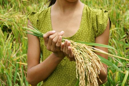 arme kinder: Weltern�hrungssicherheit, ein globales Problem, Hunger zu Afrika, brauchen Kinder, um zu helfen, m�ssen arme Leute Essen zu leben, Kind Hand mit B�ndel von Reis auf Asien Reisfeld