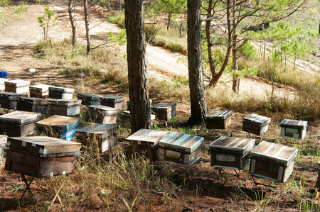 dalat: Beekeeping at Vietnam, Vietnamese agriculture, group of bee tank, group of beehive in Dalat jungle, honey is nutrition eating, bee working at bee nest Stock Photo