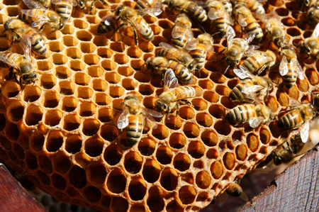 queen bee: Beekeeping at Vietnam, Vietnamese agriculture, group of bee tank, group of beehive in Dalat jungle, honey is nutrition eating, bee working at bee nest Stock Photo