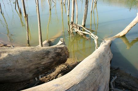 global problem: La deforestaci�n en zonas rurales de Vietnam, toc�n solitario, selva da�ada, hacer que el cambio clim�tico, medio ambiente y vida es estrecho, esto es un problema global, paisaje desolado en d�a con el �rbol seco Foto de archivo