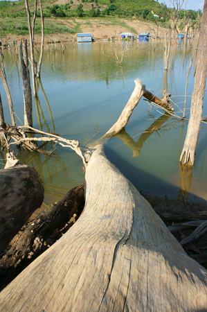 arbol de problemas: La deforestación en zonas rurales de Vietnam tocón selva dañado maquillaje entorno de vida cambio climático solitaria es estrecho esto es un problema paisaje desolado mundial en día con el árbol seco
